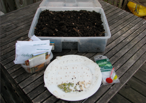 worm castings, soaked seeds, ready to go!