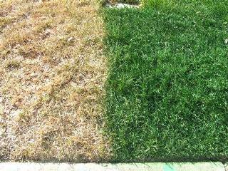Image Result For Weed And Feed Lawn Fertilizer